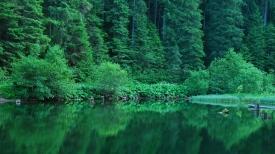 forest_summer_shrubs_herbs_water_reflection_80840_1366x768