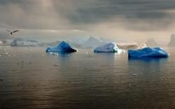 glaciers_antarctica_drift_bird_weeds_gloomy_53253_1920x1200