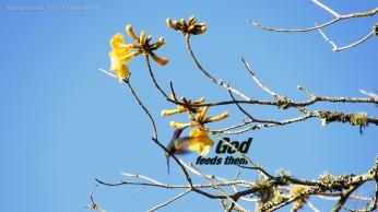 God-feeds-them-hummingbird-christian-wallpaper-hd_1366x768