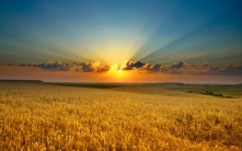 grass_field_sky_summer_light_84270_2560x1600