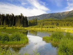 grass_summer_river_landscape_84348_1600x1200