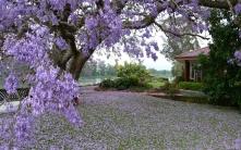 grass_trees_spring_building_92421_1920x1200