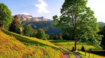 grass_trees_turning_summer_92685_1366x768