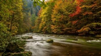 harz_germany_autumn_river_trees_107268_1366x768