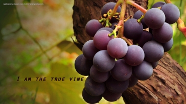 I-am-the-true-vine-christian-wallpaper-hd_1366x768