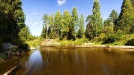 lake_trees_logs_under_water_solarly_summer_61636_2560x1440