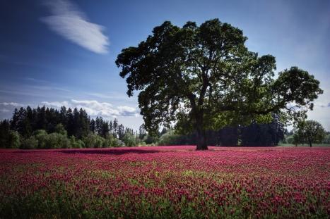 landscape_tree_field_flowers_pink_glade_cloud_56961_2048x1365