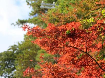leaf_branch_autumn_90948_1600x1200