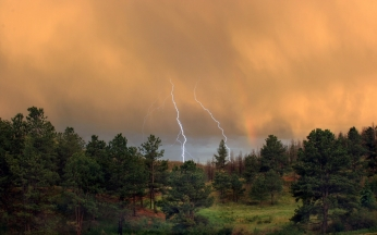 lightning_wood_trees_lines_patterns_elements_bad_weather_42407_1920x1200