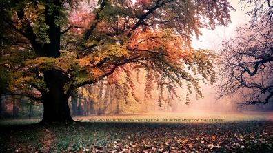 Lord-God-made-to-grow-tree-life-midst-garden-christian-wallpaper-hd_1366x768