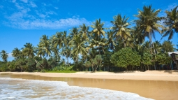maldives_tropical_beach_palm_trees_90781_5210x2931