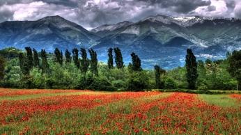 mountain_field_poppies_landscape_87143_1366x768