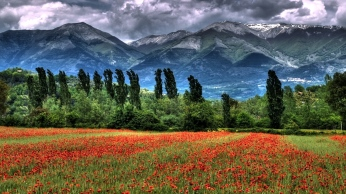 mountain_field_poppies_landscape_87143_1366x768