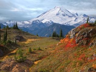 mountains_fog_vegetation_fur-trees_autumn_5721_1600x1200