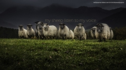 my-sheep-listen-to-my-voice-christian-wallpaper-hd_1366x768