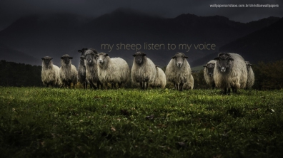 my-sheep-listen-to-my-voice-christian-wallpaper-hd_1366x768