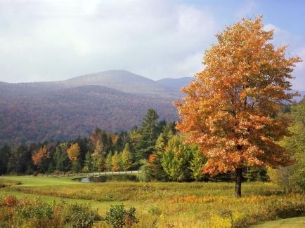 nature_autumn_trees_distance_91425_1600x1200