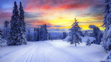 norway_winter_forest_snow_trees_101292_1366x768