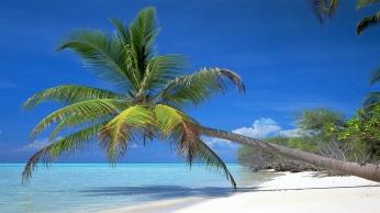 palm_tree_inclination_coast_branches_shadow_tropics_blue_water_gulf_heat_52165_1920x1080