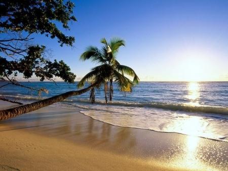 palm_tree_trees_beach_coast_wave_inclination_sun_sea_8200_1600x1200