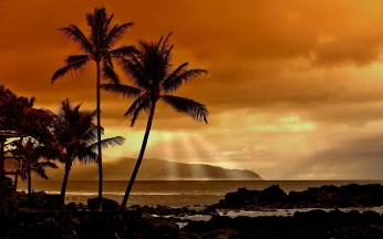 palm_trees_decline_evening_orange_sun_beams_42420_1920x1200