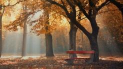 park_autumn_foliage_trees_bench_109121_1366x768