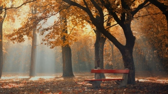 park_autumn_foliage_trees_bench_109121_1366x768
