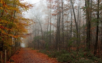 park_autumn_trees_forest_91503_1920x1200