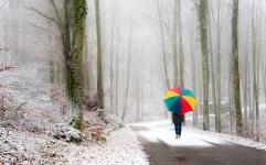 park_person_umbrella_snow_road_fog_walk_46209_1680x1050