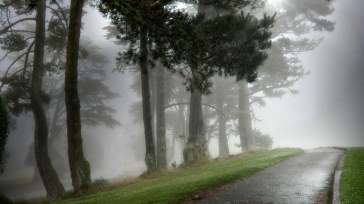 path_asphalt_wet_trees_fog_dense_haze_terribly_62296_1366x768