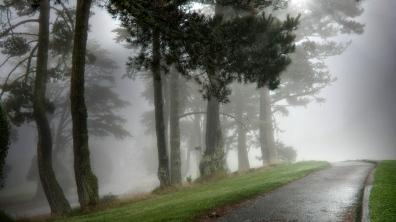 path_asphalt_wet_trees_fog_dense_haze_terribly_62296_1366x768