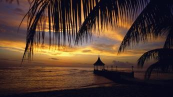 pier_arbor_palm_tree_branches_evening_sea_4877_1920x1080
