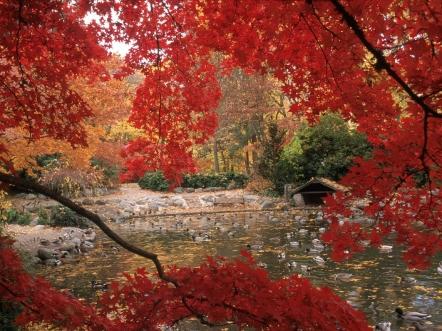 pond_ducks_trees_birds_90430_1600x1200