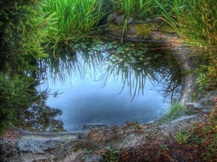 pool_grass_lake_lilies_stones_reflection_60291_1920x1440