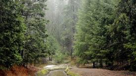 rain_wood_river_bad_weather_48422_1366x768