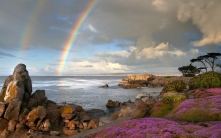 rainbow_sea_coast_stones_flowers_57406_1680x1050