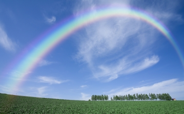 rainbow_sky_clear_from_below_arch_trees_summer_field_64056_2560x1600