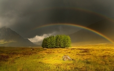 rainbow_sky_trees_glade_gloomy_cloudy_63281_1920x1200