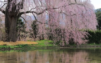river_flowers_trees_branch_92715_2560x1600