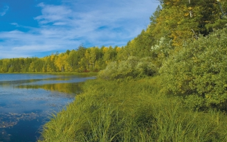 river_grass_summer_trees_81806_2560x1600