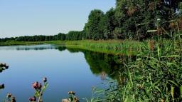 river_grass_trees_plants_86266_1366x768