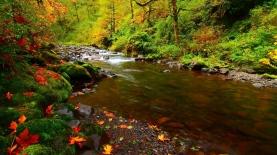 river_rocks_leaves_autumn_92757_1366x768