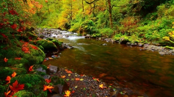 river_rocks_leaves_autumn_92757_1366x768