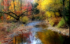 river_wood_stream_trees_reflection_stones_current_autumn_55610_1680x1050