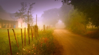 road_country_fog_protection_lodge_garden_trees_stakes_summer_60189_1366x768