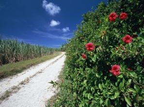 road_field_grass_dogrose_flowers_14872_1600x1200
