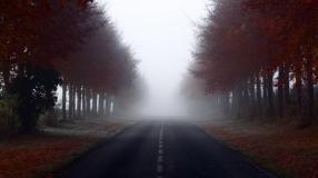 road_signs_trees_fog_100495_1366x768