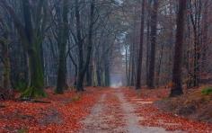 road_trees_walking_paths_leaves_82644_1920x1200