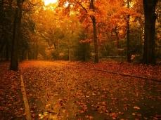 road_wood_trees_lanterns_leaves_14748_1600x1200