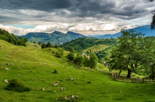 romania_field_grass_meadow_108699_4512x3000